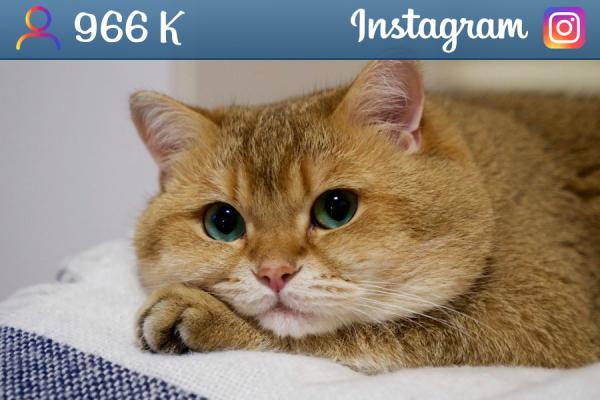 hosico_cat
