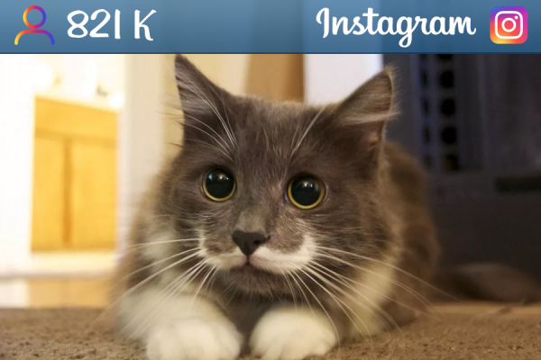 hamilton_the_hipster_cat