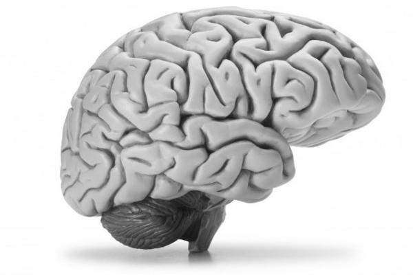 Мозг — это серое вещество