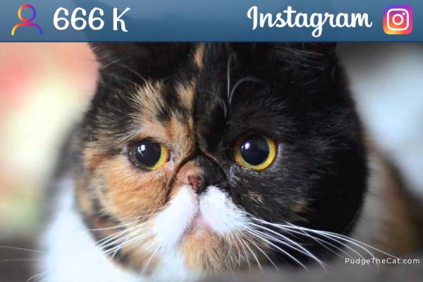 pudgethecat